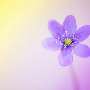 flower-1335287_1920